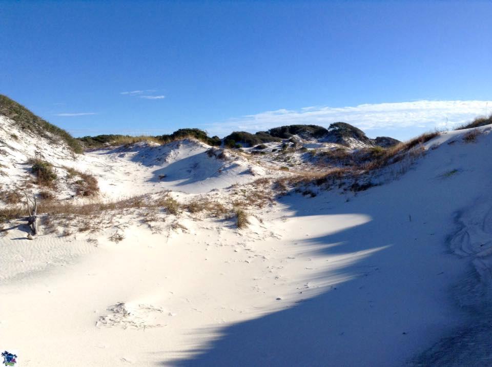 Cape San Blas Cone Heads 8020